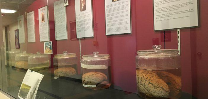 Cornell Brains On Display